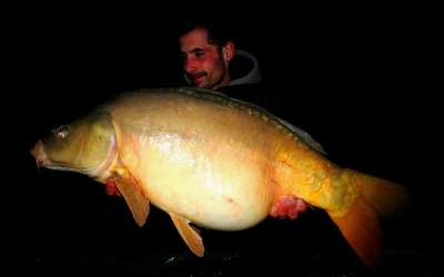 Stunning Fish in Morliere