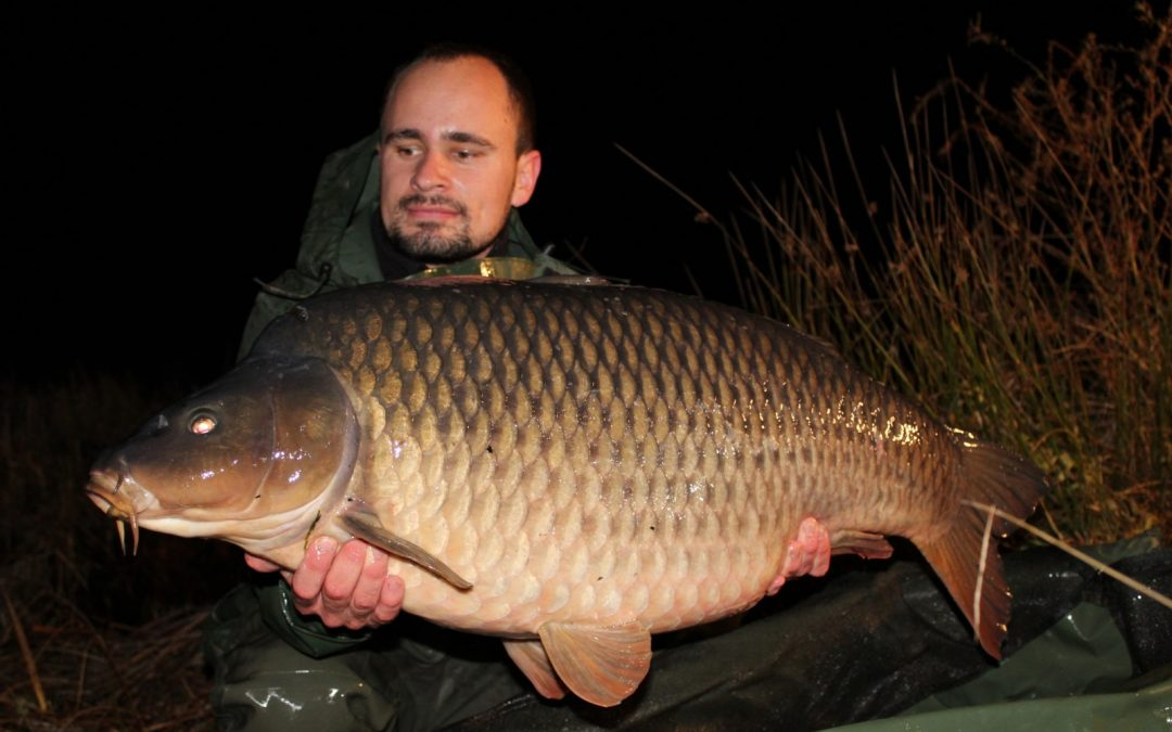 What an amazing stock of carp!