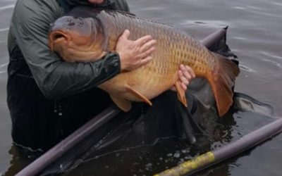 Some monsters caught in Estate Lake in recent weeks