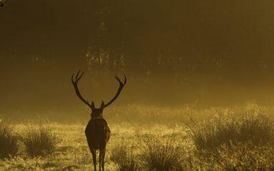 Awesome Carp & Surroundings – Deer Park Lake